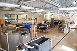 Animal Holding Lab