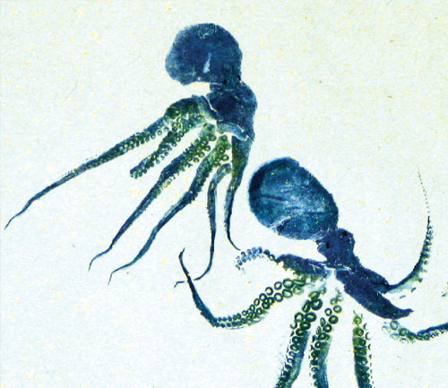 Octopus Gyotaku